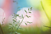 Pastel (Dhina A) Tags: sony a7rii ilce7rm2 a7r2 a7r kodak cine ektar 63mm f2 kodakcineektar63mmf2 16mm vintage old camera lens cmount pastel colors grass
