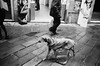 rain dog (gato-gato-gato) Tags: 35mm asph iso400 ilford ls600 leica leicamp leicasummiluxm35mmf14 mp messsucher noritsu noritsuls600 schweiz strasse street streetphotographer streetphotography streettogs suisse summilux svizzera switzerland wetzlar zueri zuerich zurigo analog analogphotography aspherical believeinfilm black classic film filmisnotdead filmphotography flickr gatogatogato gatogatogatoch homedeveloped manual mechanicalperfection rangefinder streetphoto streetpic tobiasgaulkech white wwwgatogatogatoch genova liguria italien it manualfocus manuellerfokus manualmode schwarz weiss bw blanco negro monochrom monochrome blanc noir strase onthestreets mensch person human pedestrian fussgänger fusgänger passant