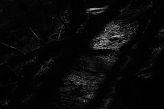 (tohlfer) Tags: centenialtrail april hiking blackandwhite blackandwhitesouthdakota blackhills blackandwhitelandscape canon canon5dmarkii canon70200f4 southdakota southdakotaart southdakotablackandwhite