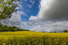Mare giallo (Silver_63) Tags: castello francia giallo panorama yellow larochepot bourgognefranchecomté fr
