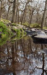 2018_04_0331 (petermit2) Tags: reflection padleygorge burbagebrook grindleford grindlefordstation longshaw peakdistrict ancientwoodland woodland derbyshire