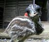 Ze ZOO Praha (sebjozef) Tags: zoo praha prague prag praga animal
