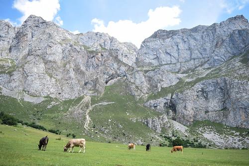 Picos de Europa. Fuente Dé. Camaleño (Cantabria)