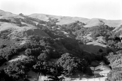 042068 27 (ndpa / s. lundeen, archivist) Tags: nick dewolf nickdewolf photographbynickdewolf 1968 1960s bw monochrome blackwhite blackandwhite 35mm film april california northerncalifornia landscape trees hills rural rollinghills building house home