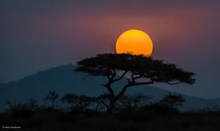 Timeless Africa