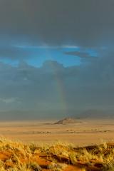 IMG_8464 (tregnier) Tags: namibia roadtrip africa travel desert animals sossusvlei leopard cheetah lion solitaire trip