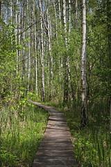 IMGP14106 (Łukasz Z.) Tags: poleskiparknarodowy nationalpark sigma1750mmf28exdchsm pentaxk3 starezaucze lubelskie rzeczpospolitapolska
