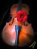 Overture (ingcuevas) Tags: violin instrument music flower red passion love tender concept petals brown beautiful aesthetic melody object black vibrant concert concierto romance concerto sonata delicate