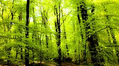 deciduous forest_01