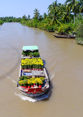 Cargo boat carrying flowers in Vietnam (phuong.sg@gmail.com) Tags: activity amazing asia asian atmosphere bentre boat busy cantho canal chanel color colorful colour crowd crowded day delta farmers flea float floating group landscape landscaping lively market mekong open people person pink river row rowing scene soctrang sunny trade travel tropicalnatural vietnam vietnamese water wooden yellow