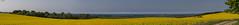 "Hoikendorf, ""Panorama vom Aussichtspunkt"" (joergpeterjunk) Tags: hoikendorf outdoor ostsee wohlenbergerwiek hohenkirchen wismarerbucht inselpoel baum feld feldweg rapsfeld himmel wolken panoramavomaussichtspunkt canoneos5dmarkiv canonef24105mmf4lisusm"