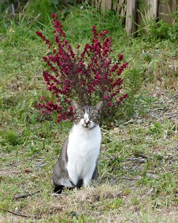 Cat Impersonating a Vase of Flowers