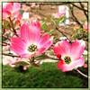 Never knew they could look like this. #collegepark #maryland #iPhone #commute #sidewalk #roadside #iPhonemacro #macro  #flower #flowersofinstagram (Kindle Girl) Tags: roadside collegepark maryland iphone commute sidewalk iphonemacro macro flower flowersofinstagram