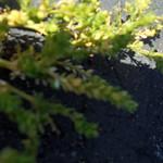 DSC03863 thumbnail