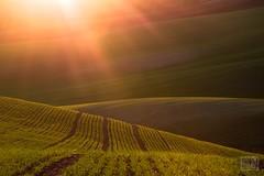 035_Moravian_Tuscany (Overtherainbow changes to KV Photography) Tags: katerinavodrazkova kvphotography landscape moravsketoskansko morava krajina moraviantuscany jiznimorava southmoravia moraviantoscana šardice