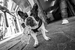 hot days in Porto (Hendrik Lohmann) Tags: streetphotography dogs bnw blackandwhite monochrome urban nikon porto city portugal