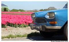 Flower Power (XBXG) Tags: 0953ms citroën ami 8 club 1970 citroënami8 citroënami ami8 blue bleu danube bloem bloemen flowers flower fleur fleurs tulp tulipe tulip tulipa liliaceae callantsoog sint maartenszee sintmaartenszee n502 schagen noord holland noordholland nederland netherlands paysbas blumen vintage old classic french car auto automobile voiture ancienne française vehicle outdoor landschap landscape sky field fields polder