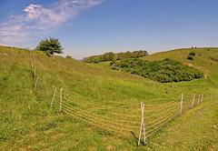 Hügellandschaft (Wunderlich, Olga) Tags: rügen inselrügen mönchgut hügel groszicker landschaft natur netzzaun bäume