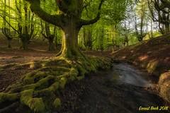The Magic forest II. (Ernest Bech) Tags: euskadi paisvasco vizcaya bosc bosque forest arbre trees river riu rio riera landscape longexposure llargaexposició llums lights luces