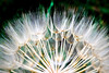 seeds (Harry McGregor) Tags: plant macro seeds croatia harrymcgregor nikon d3300 12 may 2018