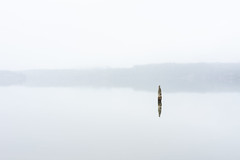 Lake Quinault Minimalism (Tzacol) Tags: quinault lake water post wood reflection cloud clouds sony a7ii 90mm macro nature naturephotography calm morning washington minimalism landscape mist