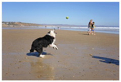 Pops@13 (~ veronicajwilliams photography ~) Tags: veronicajwilliamsphotography veronicajwilliams copyrighted bordercollie southaustralia beach moana fuji fuji18135 fujixt20 fujifilm fujiaustralia fujifilmxt20 dog canine sea ocean cute love collie playing dogplaying