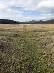 Springlawn (Baractus) Tags: springlawn spring lawn tasmania australia john oates narawntapu national park inala nature tours