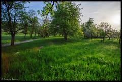 Mystical atmosphere (Sascha Renzo) Tags: sunrise sun light morning mystical lights warm summer mornings trees nature landscape