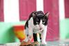 013 (studiofuntas) Tags: cat vientiane laos indochina temple animal straycat backstreet studiofuntas funtas holiday 犬写真家 猫写真家 猫写真 犬写真 動物写真 出張撮影 撮影 スタジオファンタス 地方遠征 portrait ポートレート kids写真 familyphoto kidsphoto couplephoto