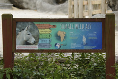 signage (ucumari photography) Tags: ucumariphotography zoomiami miami florida fl animal mammal march 2018 somaliwildass equusafricanussomaliensis dsc3531