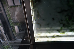 2018-04-FL-183612 (acme london) Tags: barcelona detail fira hotel jeannouvel lift liftcabin renaissancehotelfira spain