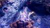 Lionfish at Lisbon Oceanarium (jbdodane) Tags: aquarium europe fish lionfish lisbon portugal