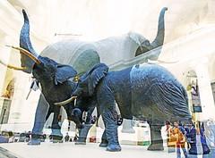 Elated Elephants (kirstiecat) Tags: elephant vegan fieldmuseum chicago creative artistic experiment people strangers sculptures multipleexposure surreal dream
