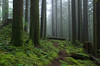 Foggy Path (Kristian Francke) Tags: fog forest nature natural bc canada outdoors pentax woods wilderness landscape landscapephotography weather foggy tree trees