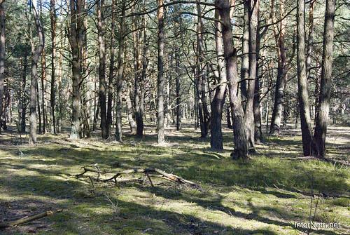 Волинський ліс InterNetri Ukraine 0309601834