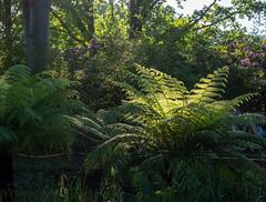 P5132011 (Photodendron) Tags: em1mk2 britzergarten