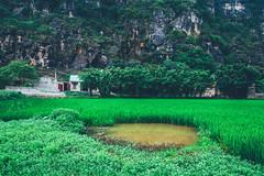 Ninh Bình in Vietnam (Paul D'Ambra - Australia) Tags: ninhbìnhvietnam alternativeplacestohalongbay halongbayonland naturalplacesinvietnam placestovisitinvietnam streetphotography topplacestovisitinvietnam ninhhải ninhbình vietnam lalentephotography pauldambra