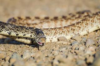 Sun Bathing Snake