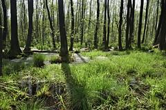 IMGP14148 (Łukasz Z.) Tags: starezaucze lubelskie rzeczpospolitapolska poleskiparknarodowy nationalpark sigma1750mmf28exdchsm pentaxk3