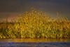 River bank (flowerikka) Tags: blossom botswana choberiverfront chobenationalpark color evening flower golden gräser light magicallight nature okavangoriver riverbank sky sunset ufer yellow water