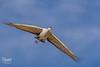 Sandhill crane (spensered) Tags: newmexico crane sandhillcrane bird birds