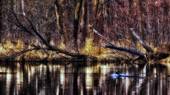 A 'Slight Splash' of colour (Bob's Digital Eye) Tags: bobsdigitaleye canon canonefs55250mmf456isstm deadwood flicker flickr lake lakescape landscape may2018 reflections t3i tonemapped trees water woodsforests abstract