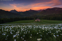 The Magical Evening @ Les Pléiades, Switzerland (Avisekh) Tags: lespleiades swiss switzerland vaud sunset nature chalet nikon wwwavisekhphotographycom d810 1424 lee filters gnd polarizer tripod rrs narcissus