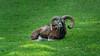 _DSC1766-bearbeitet.jpg (Burghart-Alexander) Tags: orte deutschland pflanze poing wildpark umwelt bäumeundsträucher tiere europe bundesland bayern