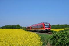 P1560121 (Lumixfan68) Tags: eisenbahn züge triebwagen baureihe 648 dieseltriebwagen alstom coradia lint 41h rapsfelder rapsblüte wahlstorf deutsche bahn db regio