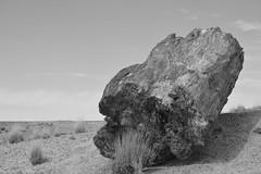 Petrified Forest National Park (dylangaughan43) Tags: arizona petrified desert nikon nikonphotography nikond5200 blackandwhitephotography blackandwhite