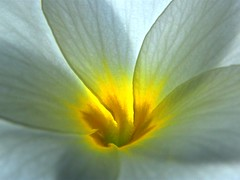Flower with Heart of Gold (Stanley Zimny (Thank You for 30 Million views)) Tags: flower bronx botanical garden ny macro white yellow