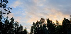 Sunset in the wetland (rve13) Tags: wetland sunset cloudsstormssunsetssunrises galaxys9 kitsappeninsula