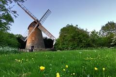 Bradwell Mill at the end of the day (jiffyhelper) Tags: apple iphobe se windmill milton keynes bradwell buttercups grass trees evening buckinghamshire
