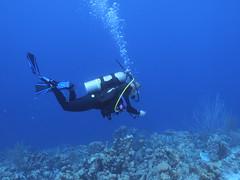 Bonaire diving 2018 (Valerie Hukalo) Tags: bonaire antilles caraïbes paysbas nature patrickhukalo diving plongée plongéesousmarine photographiesousmarine underwaterphotographe